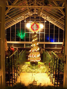 view of rose house Christmas tree from fern hall