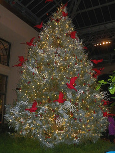 Christmas tree, East Conservatory