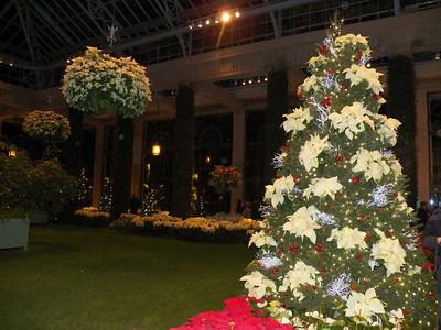 poinsettia Christmas tree, Orangery