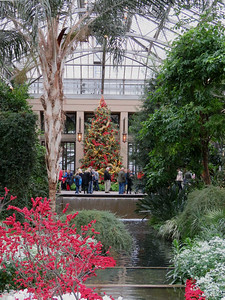 view of the East Conservatory Christmas tree from the entrance