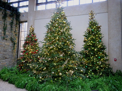 Christmas trees near the Green Wall