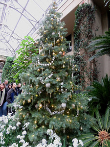 another Christmas tree in the  the East Conservatory