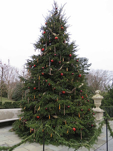large outdoor Christmas tree