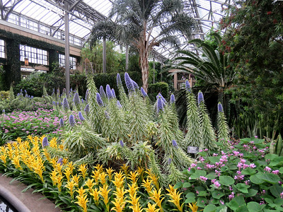 flowers, including Variegated Pride-of-Madeira in the East Conservatory