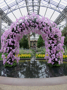 arch of Phalaenopsis orchids in the East Conservatory