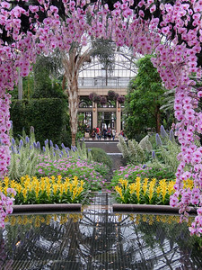 looking through the arch of orchids in the East Conservatory