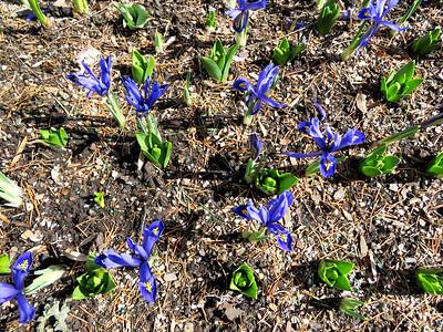 mini-irises outside the entrance doors