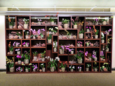 orchid display in the lobby