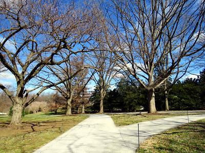 Oak and Conifer Knoll