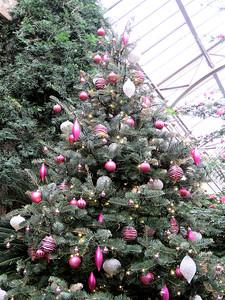 Christmas tree, East Conservatory