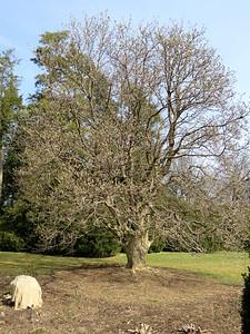 budding tree, the Flower Garden Walk, March 20, 2019