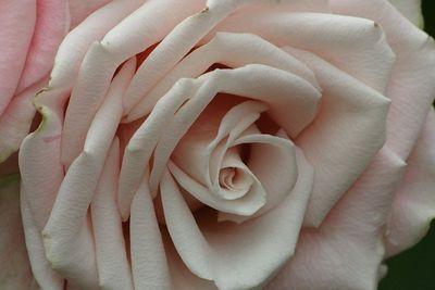 SM LW Flowers IMG_2077