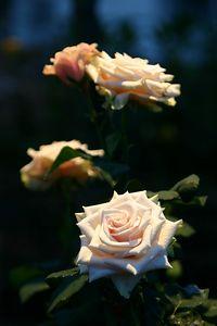SM LW Flowers IMG_6411