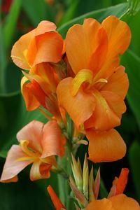 SM LW Flowers IMG_6549