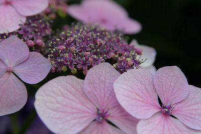 SM LW Flowers IMG_4082
