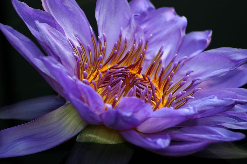 SM LW Lilies IMG_6616