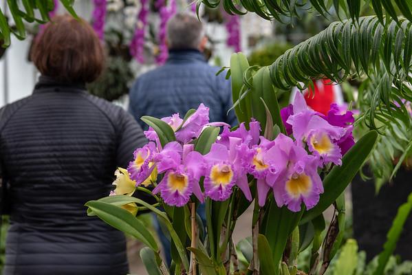 2-18-19 Fern Passage - Longwood Gardens-5164
