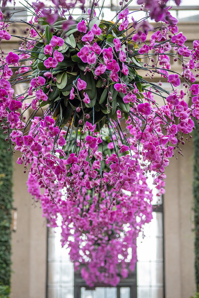 2-18-19 Orchid Hanging Baskets - Longwood Gardens-5229