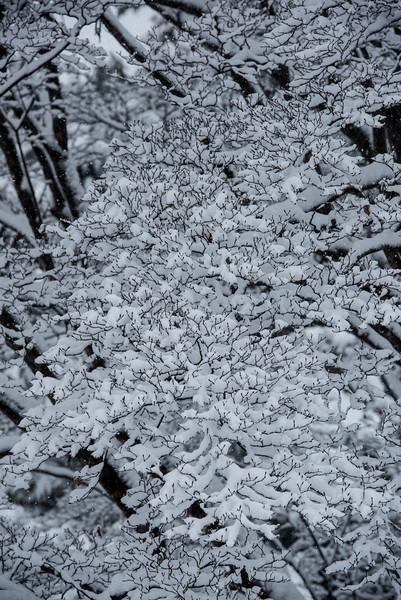 Snow at Longwood