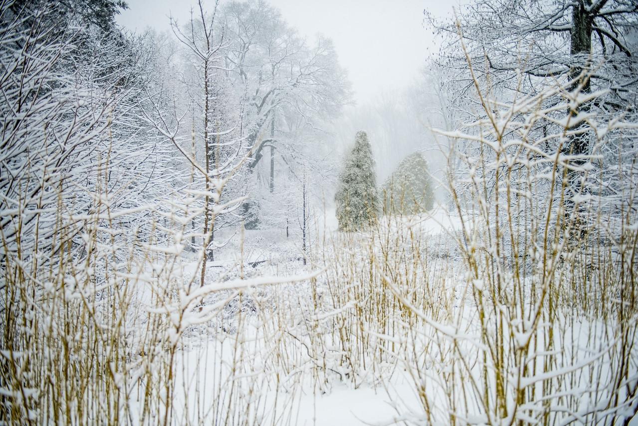 3-5-15 Snow - Longwood-45