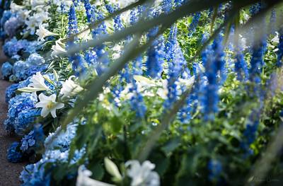 longwood lg flowers blue 2 (1 of 1)