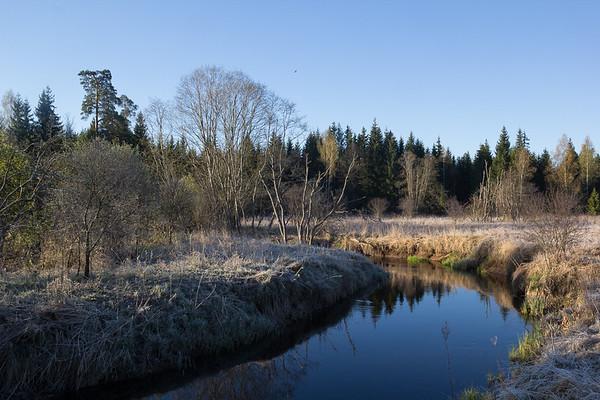 Landscape with Osprey