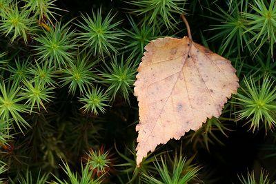Sügis - Autumn