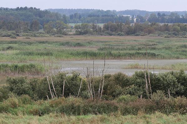 Aardla järv