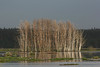 Valguta polder