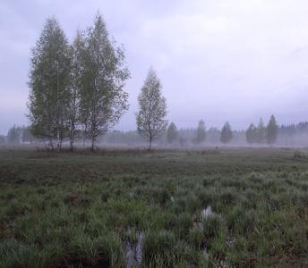 Rohumaad - Grasslands