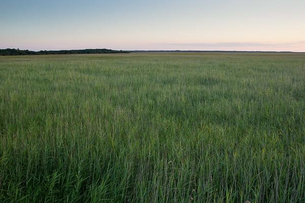 Reedbed in Matsalu Nature Park, Estonia