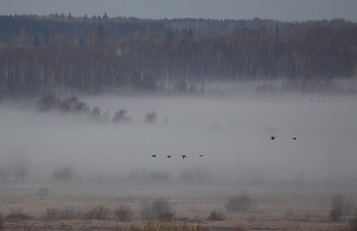 Udupildid - Foggy pictures