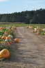 pumkin patch 104