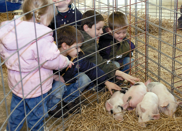 Emily Michels, 2, from left to right, Joey Lidy, 5, Noah Heuerman, 5, and Kyle Hardiek, 5, take their turn petting some of the piglets at the Dieterich FFA's petting zoo at the Dieterich High School in 2003.<br /> Eric Williams photo