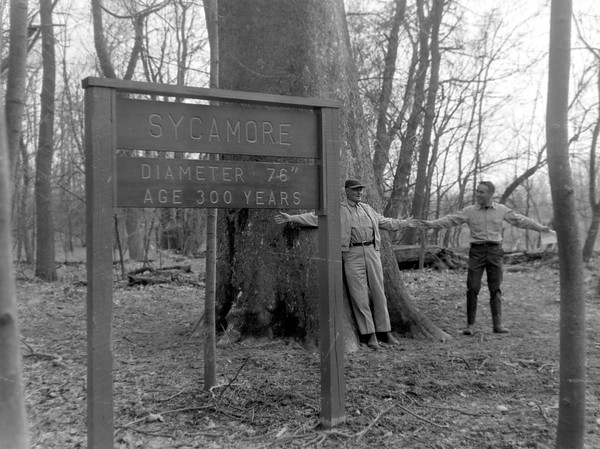 Shelby State Forest 1965
