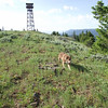 Gus at High Ridge LO