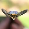 2.44ct Fancy Brown Yellow Old European Cut Diamond GIA FBY SI1 13