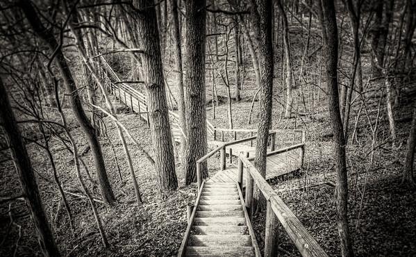 A Walk Through the Woods - $2
