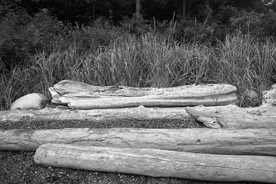 Driftwood at Watmough Bay