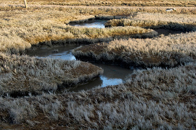 Ice and Frost in the Marsh