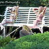 Lounging Mermaids by Lora Mosier<br /> <br /> These girls were just hanging out, watching the world go by on Put-In-Bay.
