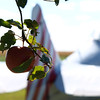 Plane and Simple by Lora Mosier<br /> <br /> This was taken at Thacker Field during the Metro Warbirds hog roast.