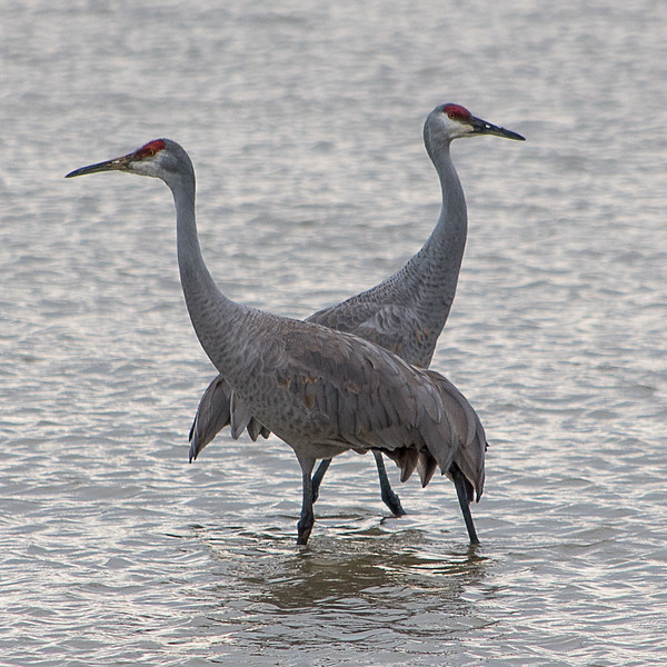 Opposite Cranes