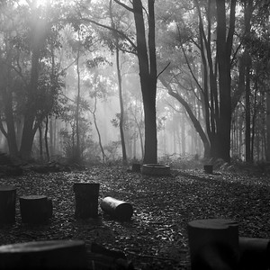 """Misty Bush Camp"""