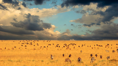 End of the Great Migration, Tanzania
