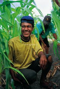 AID - Positive Negative Project PNG 2003