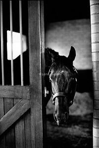 INFLUENCE : Octagonal, Champion Horse