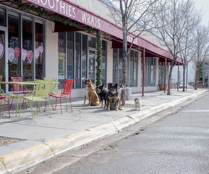 These dogs were waiting so patiently!