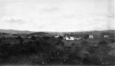 This view of Gilbert Smith's orchard and the Los Altos downtown triangle was probably taken from a second-floor window of Smith's house in January 1913.