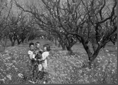 Standing among flowering apricot trees and yellow mustard on Almond Ave, March, 1954. The following month that orchard was bulldozed to prepare the site for the construction of Los Altos High School.